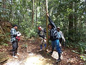 Elephant Survey, North Kalimantan, Heart of Borneo, HoB