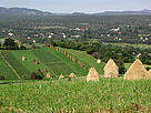 Maramures landscape, with traditional haystacks. / ©: WWF / Pop Emil