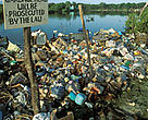 Garbage dump in mangrove swamp, Belize.