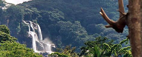 Eastern Arc Montane Forests - A Global Ecoregion   WWF