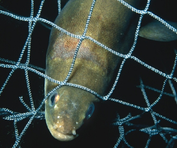 A joint NGO proposal to EU Ministers regarding European eel