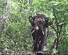 An Asian elephant captured by a camera trap in Northern Karen State of Myanmar