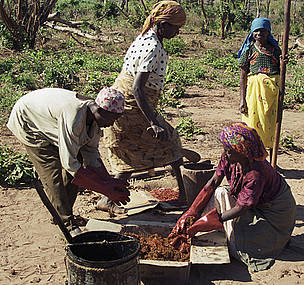 Making elephant dung-and-chilli bombs to deter raiding elephants, Mozambique.