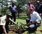 EU Ambassador to Uganda planting a ceremonial tree during a recent field visit to the Rwenzori Region in Western Uganda