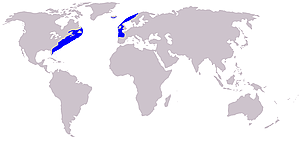 Atlantic northern right whale range      © Wikipedia