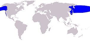 Pacific northern right whale range      © Wikipedia