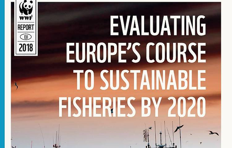Member States lagging behind on Common Fisheries Policy implementation