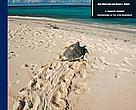 Exploitation, Trade and Management of Marine Turtles