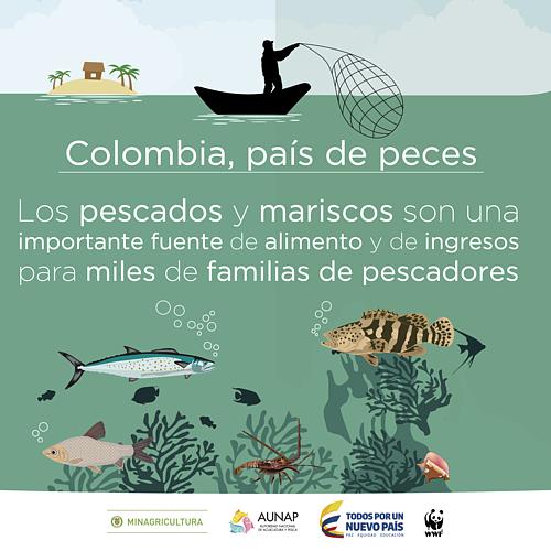 Colombia pa s de peces wwf for Criaderos de pescados colombia