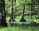 Protected flooded forest in Germany. More and better forest protection is wanted in Europe.