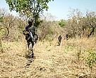 600 soldiers and a helicopter of its elite Bataillon d´intervention rapide (BIR – Rapid Intervention Battalion) have been mobilized to stop poachers from entering its territory to kill elephants for their ivory.