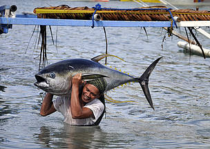 Gone fishing: solutions for the tuna trade