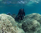 Filming the coral bleaching at Lizard Island XL Catlin Seaview Survey