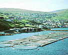 Fish farms, like this one in the Faeroes Islands, are a major consumer of fish oil and fishmeal.