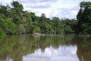 Government creates five PAs in the Amazon