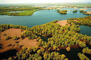Floodplains of the Danube in Croatia, Kopacki Rit.