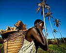 A woman transports a basketful of baked sago from a pit oven back to Rhoku village. Sago is a common subsistence crop in Papua New Guinea.