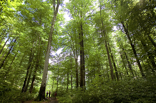 Importance of Forests WWF