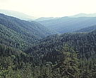 forests of Georgia - a national treasure.