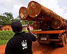 Alphonse of WWF Cameroon pointing at FSC certified logs on a logging truck, East province, Cameroon.