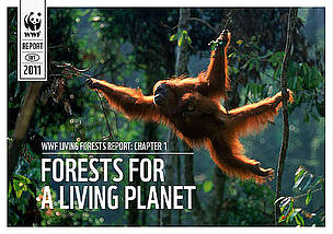 / ©: WWF International