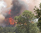 Forest fire in France, summer of 2003.<BR>