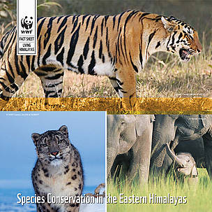 Species Conservation in the Eastern Himalayas