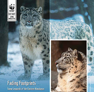 Snow Leopards of the eastern Himalayas