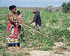 Small-scale farming in Africa is almost totally dependent on direct rainfall, and is exceptionally vulnerable to the uncertainties and weather extremes of global warming. Bevala village, Madagascar.