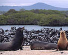 The <I>Galapagos Sustainable Energy Initiative</I> will help protect the Galapagos Islands from pollution and other threats for generations to come.