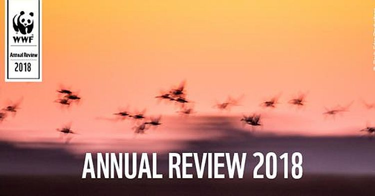 The WWF Annual Review 2018 is Out Now!