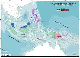 Green turtle migrations in the Coral Triangle