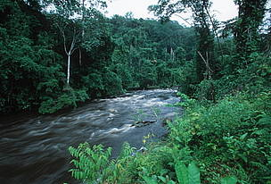 Tropical Rain Forest. Vegetation on riverbank - moist forest of the Western Congo Basin at the edge ... / ©: WWF-Canon / Martin HARVEY