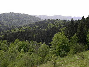 Mediterranean mixed forests in Sjeverni Velebit National Park, Croatia. / ©: WWF / Gérald HIBON