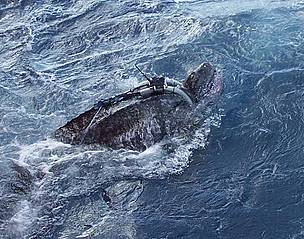 Gurí, first male Leatherback turtle.  	© Marin Abreu / PNOFA