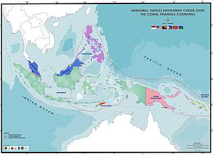 Hawksbill turtle migrations in the Coral Triangle
