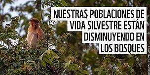 Nuevo informe de WWF: Poblaciones mundiales de vida silvestre en los b