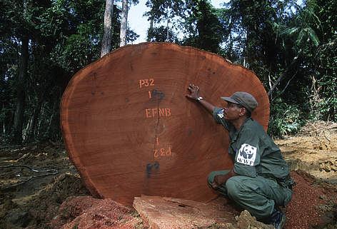 WWF staff monitor logging operations in Gabon in Central Africa. rel=