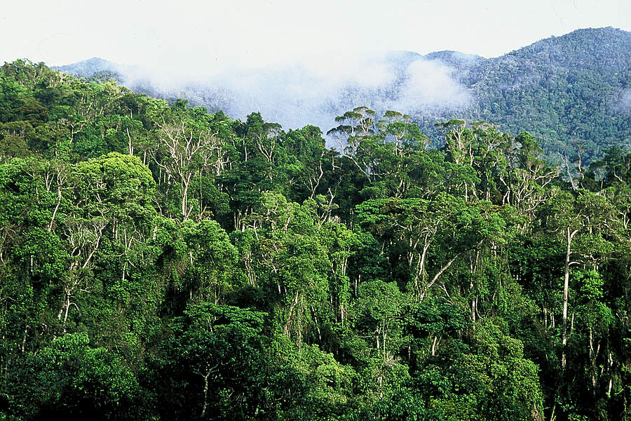 WWF - Ala Atsinana - Rainforest