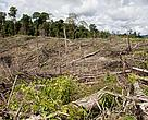 Every year, the three regions lose millions of hectares of tropical forest, even though the economic value of the forests is far greater than the benefits of almost any alternative land use.