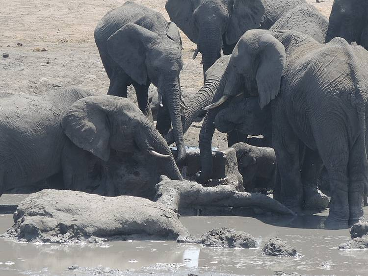 Elephant anti-poaching activities bear clear results in KAZA