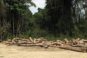 Illegal logs confiscated by authorities at Xe Pian NPA Checkpoint, southern Laos