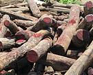 Illegal Rosewood stockpiles