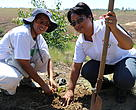 Reforestation of WWF Madagascar team