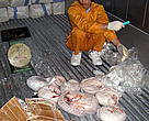 This month, customs inspectors and enforcement officers took possession of more than 16 tons of pangolins at Hai Phong port in Viet Nam. It is the largest seizure of these animals ever in the country.