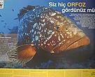 Awareness campaign on the the declining grouper populations