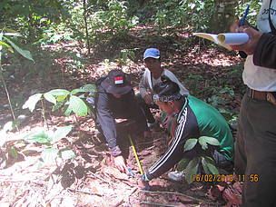 Heart of Borneo, Elephant Survey, Nunukan, North Kalimantan, HoB, Mikel