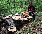The primeval beech forests of the Eastern Carpathians in Slovakia and Ukraine are characterised not only by giant living trees but also by deadwood, which is vital to the habitat and ecosystem.
