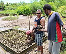WWF-Pacific's climate change support officer, Apolosa Robaigau (Left) and Natutu men transferring the mangrove seedlings to the vehicle to transport to Nailaga village