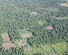 Aerial view of small-plot deforestation in Paraguay